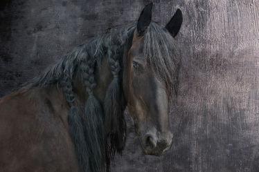 Bild mit Tiere,Pferde,Tier,Pferd,Friesen,Hengst