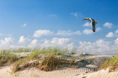 Bild mit Natur, Landschaften, Sand, Möwen, Sandstrand, Ostsee, Meer, Landschaft, Düne, Dünen, Dünengras, Möwe, Möve, Möven, Strandhafer