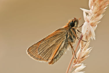 Bild mit Tiere, Insekten, Schmetterlinge, Tier, Schmetterling, Tierwelt, butterfly, Falter, Insekt