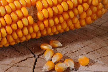 Bild mit Gelb, Frucht, Gemüse, Küchenbild, Stilleben, Küchenbilder, KITCHEN, Küche, Mais, Maiskolben, Maiskörner, Körner, Zutaten