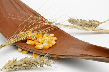 Bild mit Getreide, Küchenbilder, KITCHEN, Küche, Erntezeit, Kokosblatt, Korn