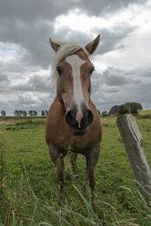 Bild mit Pferde