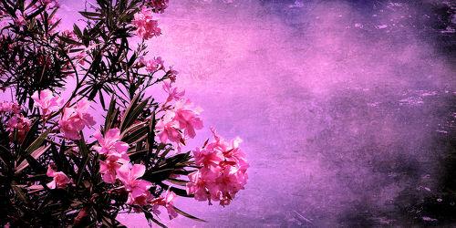 Bild mit Kunst,Blumen,Rosa,Blume,Flower,Abstrakt,Blüten,yammay blumig,VINTAGE,pink,Schatten,Silhouette,natur kunst