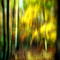 Bild mit Kunst,Wald,yammay waldig,Schatten,Silhouette,natur kunst