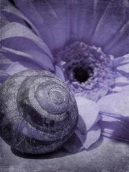Bild mit Kunst,Blumen,Blume,Flower,Abstrakt,Blüten,yammay blumig,Schatten,Silhouette,natur kunst