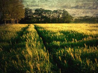 Bild mit Kunst,Landschaften,Landschaft,Abstrakt,yammay ländlich,Land,Schatten,Silhouette,natur kunst,ländlich