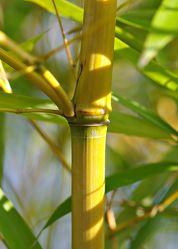 Bild mit Natur, Bambus, Meditation, Ruhe, Entspannung, Wellness, bambuswald, Yoga, bambusstangen, Bambusblatt, Bambusblätter, zen