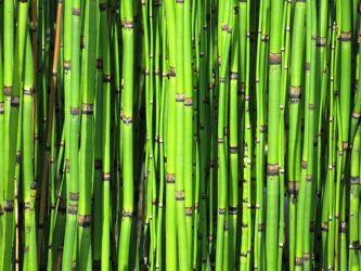 Bild mit Natur, Pflanzen, Bambus, bambusstruktur, Pflanze, Wellness