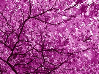 Bild mit Bäume,Wälder,Lila,Wald,Baum,Blätter,Blatt,Abstrakt,pink,Ast,Äste