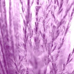 Bild mit Pflanzen,Gräser,Blumen,Lila,Violett,Blume,Pflanze,Gras,Gartenblumen,Weide,Weiden