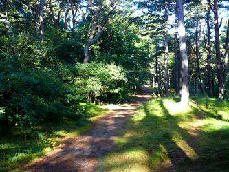 Bild mit Natur, Bäume, Wege, Wald, Baum, Weg, Waldweg, Insel, Usedom, Forst