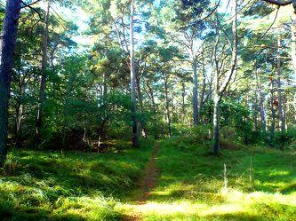 Wald im Morgenlicht