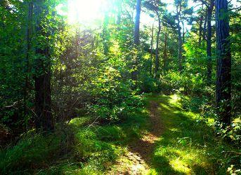 Bild mit Natur, Bäume, Wege, Sonne, Wald, Baum, Weg, Waldweg, Insel, Usedom, Forst