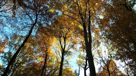 Bild mit Bäume,Jahreszeiten,Herbst,Wald,Entspannung,Landschaft und Natur,Herbstsonne,Herbstlicht,Goldener Herbst,Oktober,November,Herbststimmung,Baumwipfel