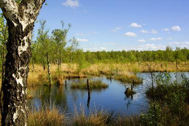 Bild mit Wasser, Pflanzen, Gräser, Landschaften, Landschaften, Gewässer, Seen, Birken, Sträucher, Baum, Birke, Gras, See, Spiegelungen, Moor, Sumpf