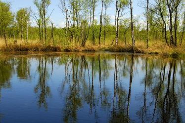 Bild mit Wasser, Pflanzen, Gräser, Landschaften, Landschaften, Landschaften, Bäume, Seen, Birken, Sträucher, Baum, Birke, Gras, See, Spiegelungen, Moor, Sumpf