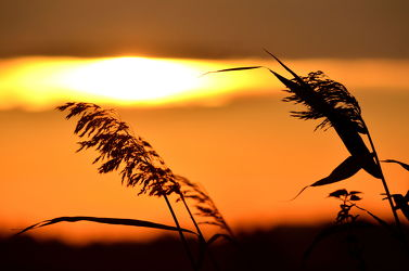 Bild mit Himmel, Sonnenuntergang, Sonnenaufgang, Dämmerung, Sonne, Ostsee, Meer, Sunset, Feld, Felder, Abend, Abendhimmel, Korn, ostseeurlaub