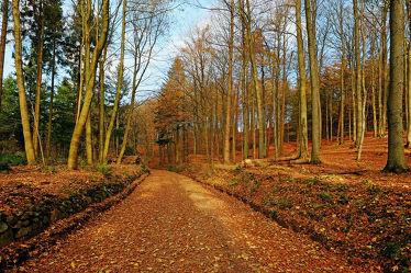 Bild mit Bäume,Herbst,Herbst,Sonne,Licht,Bunt,farbig,Wandern,Wanderwege,Schleswig_Holstein,Laub,Naturpark,Herbstidylle,Hüttener_Berge