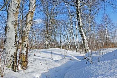 Bild mit Pflanzen,Gräser,Himmel,Schnee,Weiß,Birken,Blau,Felder,Schönheit,Winterzeit,Wiesen,Moor,Hochmoor,Unterholz,Lebensgefahr,Tiefmoor,Vorsicht,Tücken,Sumpfmoor,Schneefelder,Grasbüschel,Schneefläche