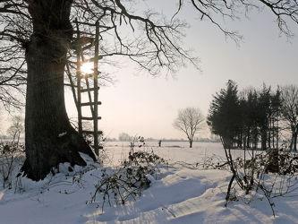 Bild mit Pflanzen,Gräser,Himmel,Bäume,Winter,Schnee,Weiß,Wege,Nebel,Sonne,Hochsitz,Felder,Winterzeit,Wiesen,Ausspannen,Ausspannen,Geniessen,Geniessen,Idylle,Wanderwege,Dunst,Schneespuren,Ausschau