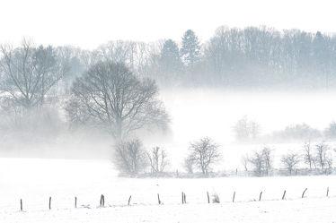 Bild mit Bäume,Winter,Schnee,Sträucher,Nebel,Landschaft,Felder,Winterzeit,Kälte,Frost,Wiesen,Kälteeinbruch,Wärmeeinbruch