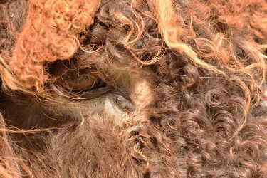Bild mit Säugetiere, Augen, Fell, Esel, Warder, Poitou_Esel, Tierpark_Arche_Warder, Tierpark_Warder, Blicke, Alte_Nutztierrasse