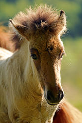 Bild mit Säugetiere, Pferde, Kinderzimmer, Pferd, Herde, Porträt, Pferdekopf, Koppel
