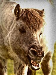 Bild mit Säugetiere, Pferde, Pferd, Traum, Atem, Freund, Traumbild, Küsse, Begrüßung, Liebling, Atemluft, Freundin