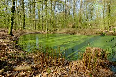 Bild mit Wasser, Grün, Pflanzen, Landschaften, Bäume, Wälder, Frühling, Laubbäume, Wald, Laubwälder, Leben, Ökosystem