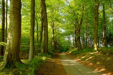 Bild mit Natur,Wälder,Wege