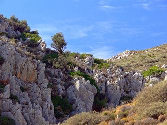 Bild mit Pflanzen, Landschaften, Berge, Felsen, Urlaub, Mittelmeer, Reisen, Stille, Europa, Wandern, Ausspannen, Geniessen, Gestein, Kreta, Abendidylle, Ãgäis, Baumgrenze, Gestrüpp