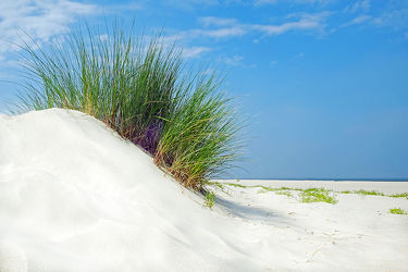 Windstille im Dünensand