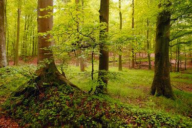 Bild mit Natur, Bäume, Wälder, Wald, Baum, Blätter, Waldboden, Spaziergang, Erholung