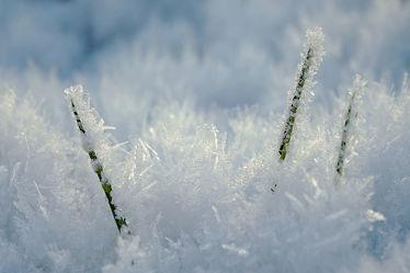 Bild mit Grün,Gräser,Winter,Schnee,Weiß,Sonne,Makro,Gras,Winterzeit,nahaufnahme,Kälte,Eiskristalle