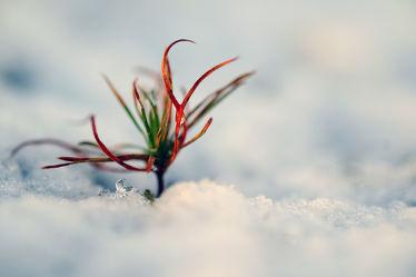 Bild mit Gelb,Schnee,Eis,Weiß,Rot,Blau,Sonne,Gras,Licht,Felder,Acryl,Tapete,Winterzeit,Frost,Wiesen,Ausspannen,Idylle,Moos,Wandbehang