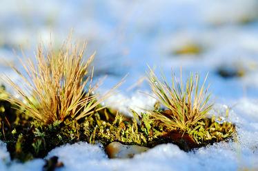Bild mit Gelb,Grün,Gräser,Schnee,Eis,Weiß,Blau,Sonne,Gras,Licht,Felder,Winterzeit,Frost,Wiesen,Idylle