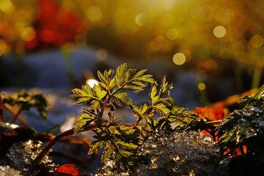 Bild mit Gelb,Pflanzen,Winter,Schnee,Eis,Blumen,Rot,Blau,Sonne,Blätter,Licht,Bunt,Felder,Winterzeit,FARBE,farbig,Frost,Wiesen,Ausspannen,Idylle,Wandbehang