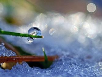 Bild mit Gräser,Winter,Schnee,Eis,Sonne,Sonnenschein,Makro,Gegenlicht,Wassertropfen,Tropfen,Winterzeit,nahaufnahme,Moose,Farne,Schneetropfen