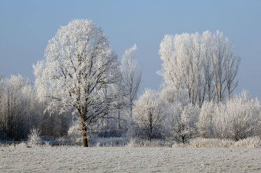 Bild mit Landschaften,Himmel,Bäume,Winter,Weiß,Blau,Sonne,Braun,Felder,Felder,Winterzeit,Erholung,Wiesen,Wiesen,Wandern,Ausspannen,Rauhreif,Raureif,Dunst