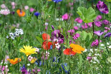 Bild mit Gelb, Grün, Gräser, Blumen, Frühling, Rot, Blau, Wildblumen, garten, Beet
