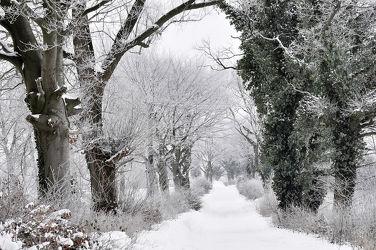 Bild mit Bäume,Winter,Schnee,Sträucher,Wanderweg,Winterzeit
