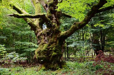 Bild mit Natur, Bäume, Wälder, Wald, Baum, Laubwald, Pilze, Moos, Urwald