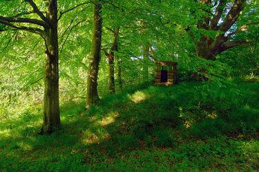 Bild mit Natur, Bäume, Frühling, Tanne, Fichten, Wald, Waldweg, Wanderweg