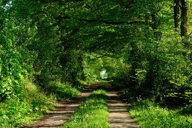 Bild mit Bäume, Frühling, Sonne, Wald, Wanderweg, Alleen, Wandern, Abendsonne