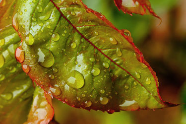 Bild mit Herbst, Blätter, Regentropfen, Laubblatt, Bunt, Tropfen, FARBE