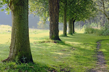 Bild mit Bäume, Bäume, Wälder, Nebel, Wald, Laubwälder, Allee, Morgenstimmung