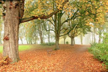 Bild mit Bäume,Herbst,Herbst,Nebel,Blätter,Sitzbank,Textur,Erholung,Wandern,Dunst,Ruheplatz