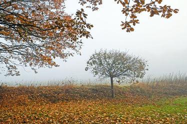 Bild mit Bäume,Weiß,Herbst,Herbst,Nebel,Braun,Blätter,Morgenstimmung,grau,Dunst
