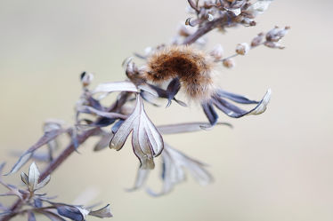 Bild mit Herbst, Herbst, Insekten, Braun, Felder, Wiesen, grau, Raupe, Trockenpflanze