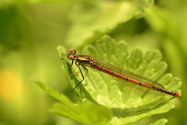 Bild mit Frühling, Insekten, Sonne, Blätter, Licht, Libellen, frühjahr, Sonnenlicht, Libelle